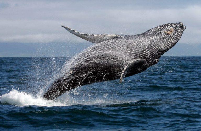 7. Avista ballenas