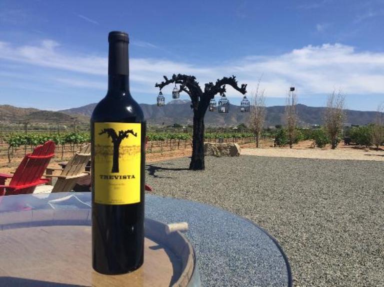 7-trevista-vineyards