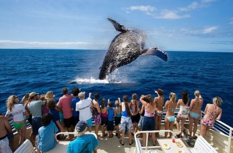14-cual-es-el-mejor-lugar-para-observar-ballenas
