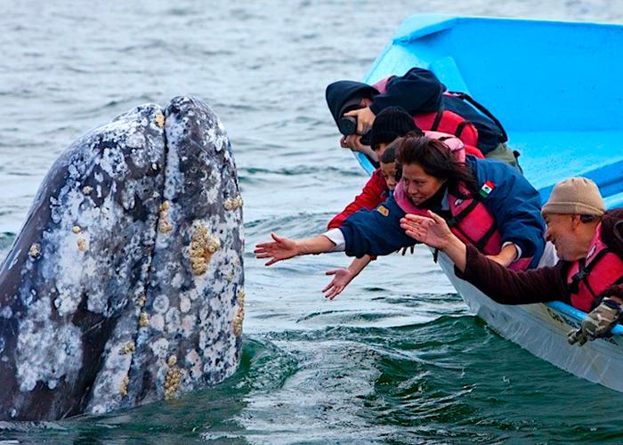 7-observa-la-ballena-gris