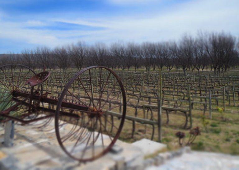 15-hay-otras-casas-vinicolas-de-interes