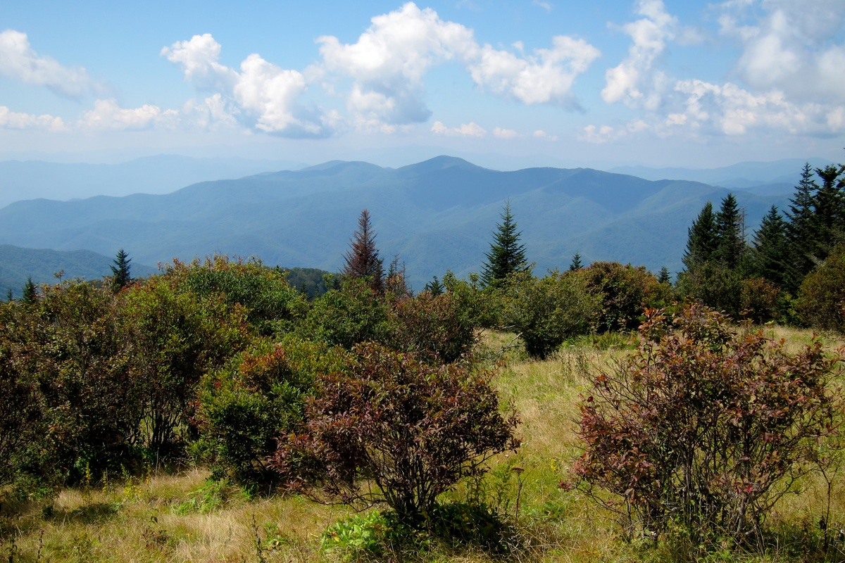 View from Andrews Bald in Great Smoky Mountains National Park.