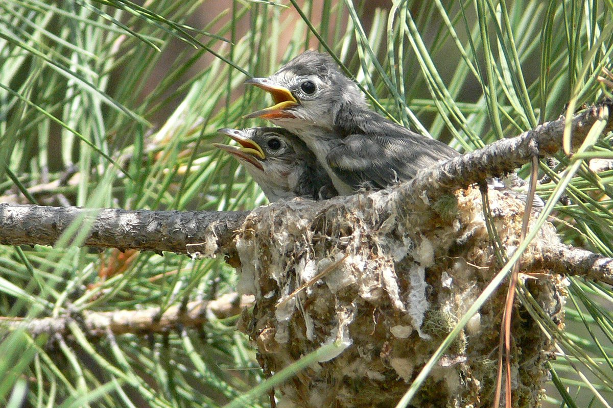 Baby birds looking for dinner in Bandelier National Monument.