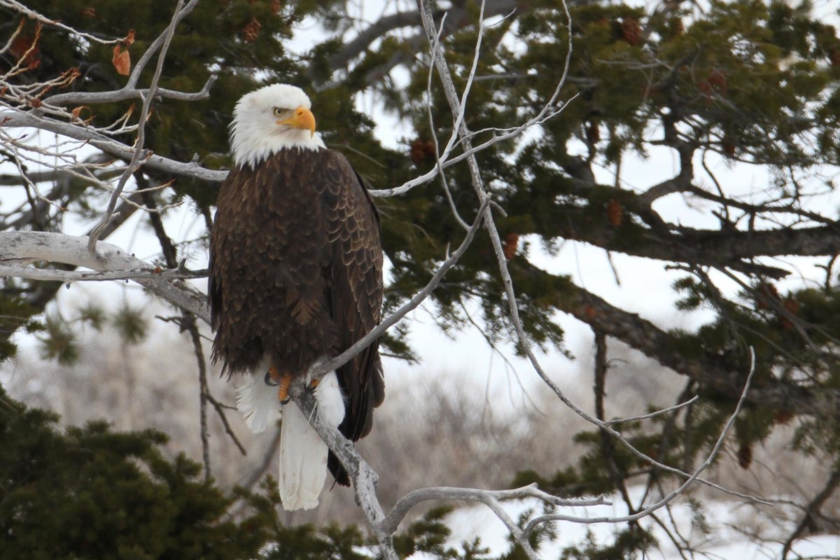 Keep an eye peeled for Bald Eagles along this trail.
