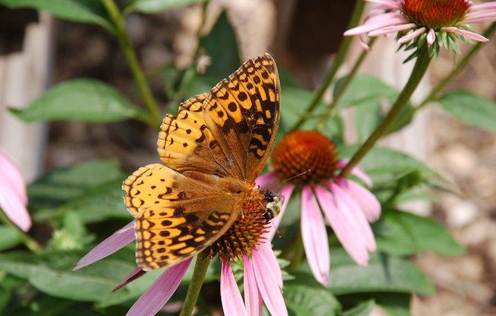 Butterfly in Bear Creek Lake State Park Virginia.