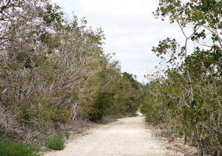 Bear Lake Trail in Everglades National Park.