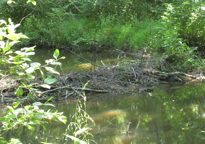 Beaver Dam in Bear Creek Lake State Park in Virginia.