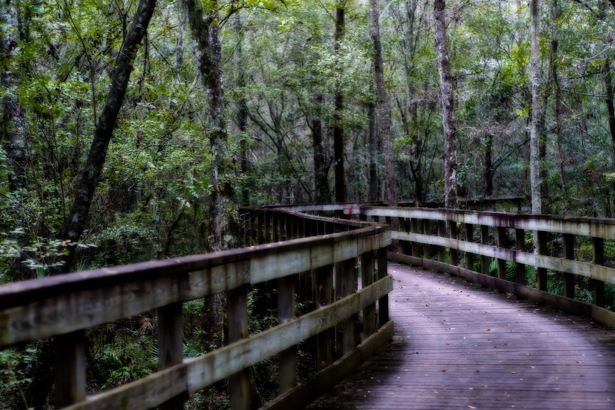 The Birdwalk Trail in Reed Bingham State Park, Georgia.