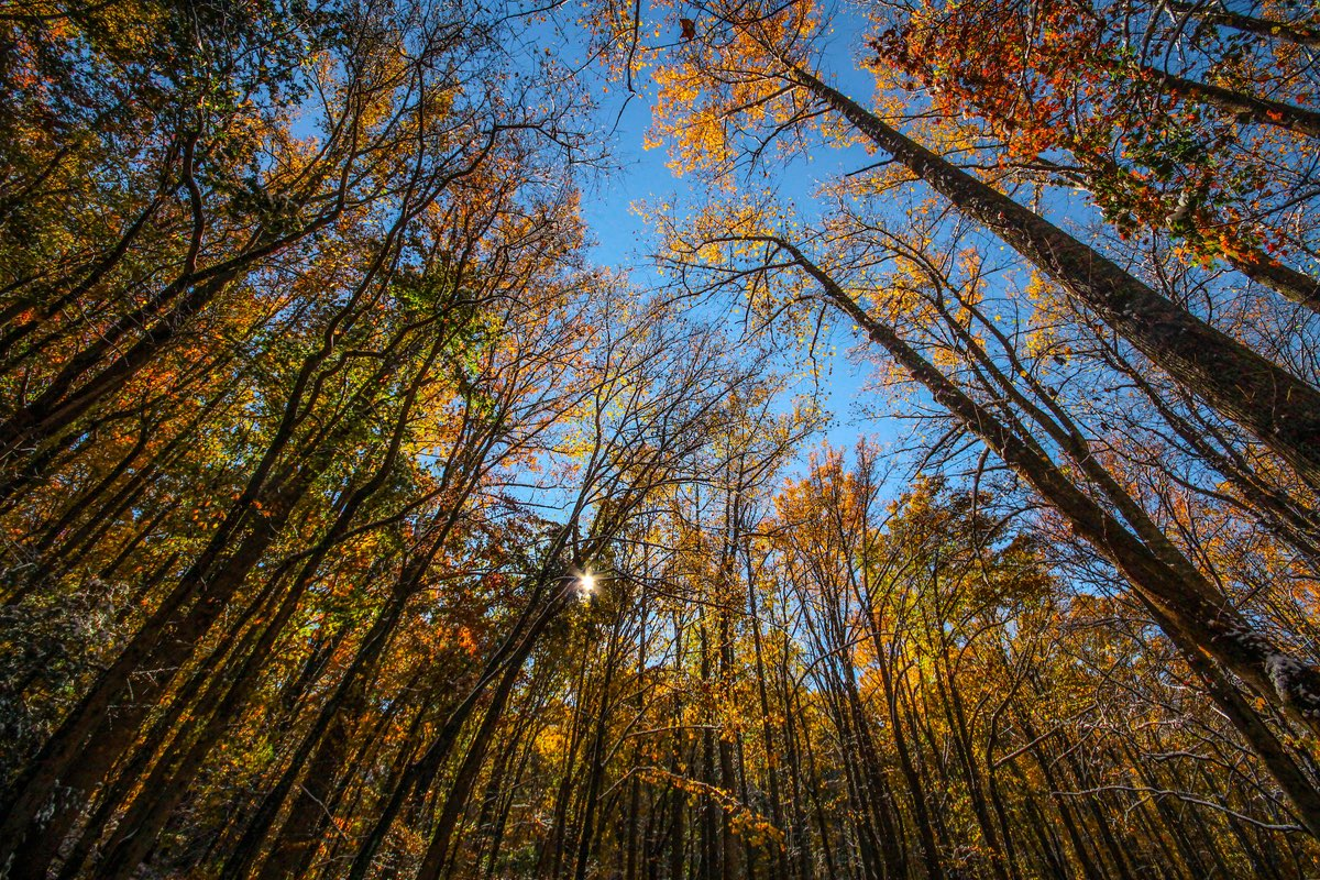 Fall foliage in Great Smoky Mountains National Park.