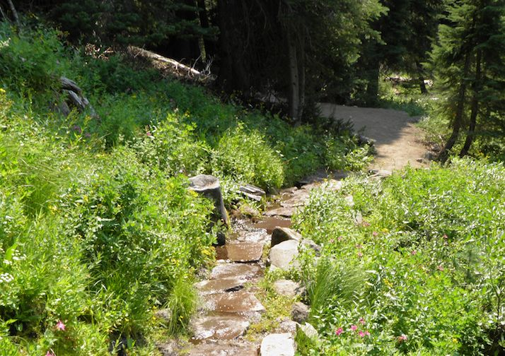 Short and easy Castle Crest Wildflower Trail in Crater Lake National Park.