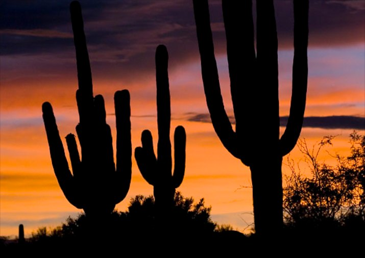 Saguaro sunset in Catalina State Park near Tucson