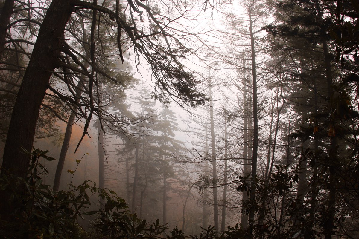 Hiking through the fog along the Chimney Tops Trail.