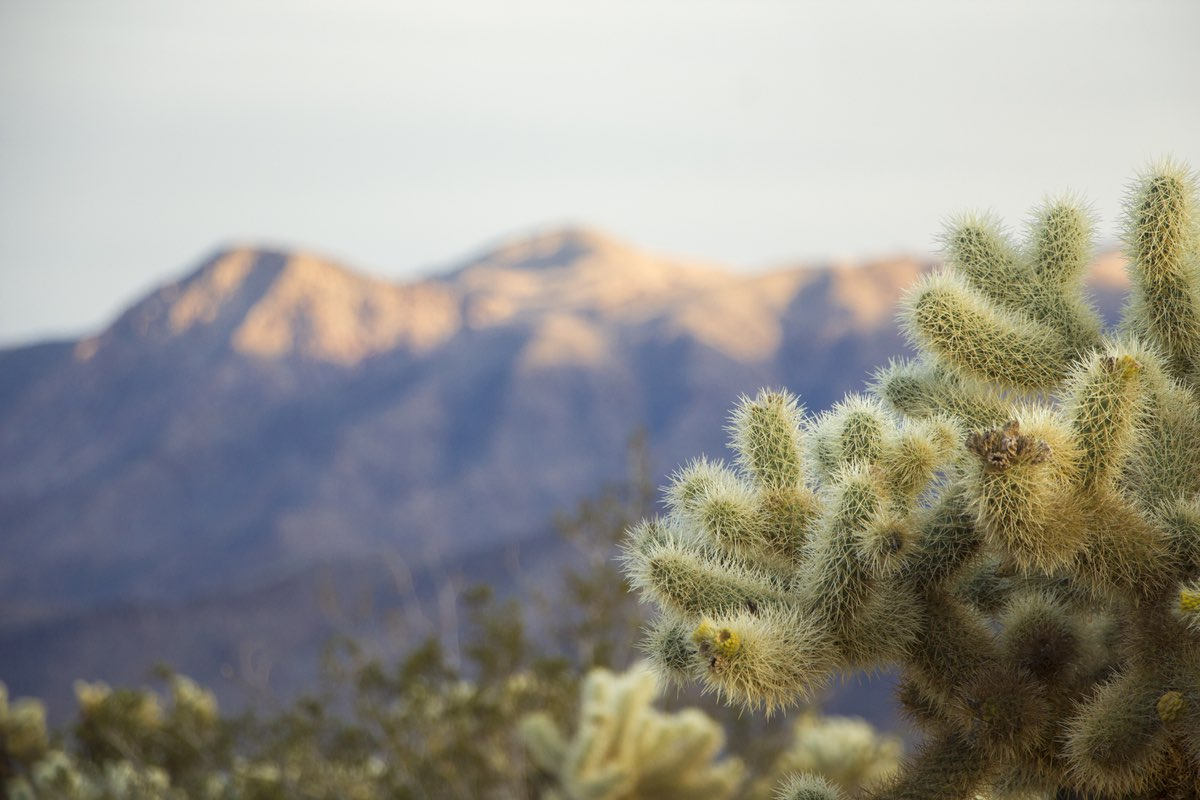 Hiking the Chollo Cactus Garden Trail in Joshua Tree National Park.