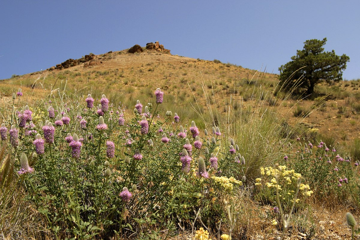 Wildflowers in the Claro unit of John Day Fossil Beds National Monument.