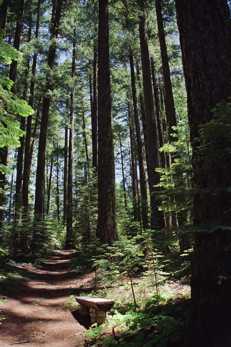 Douglas Fir lined Cliff Nature Trail in Oregon Caves National Monument.