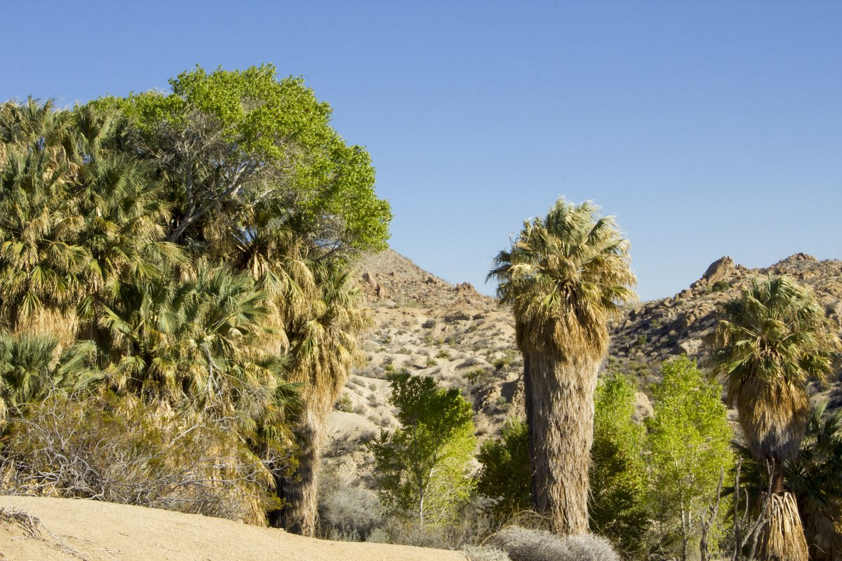 Cottonwood Springs Trail in Joshua Tree National Park.