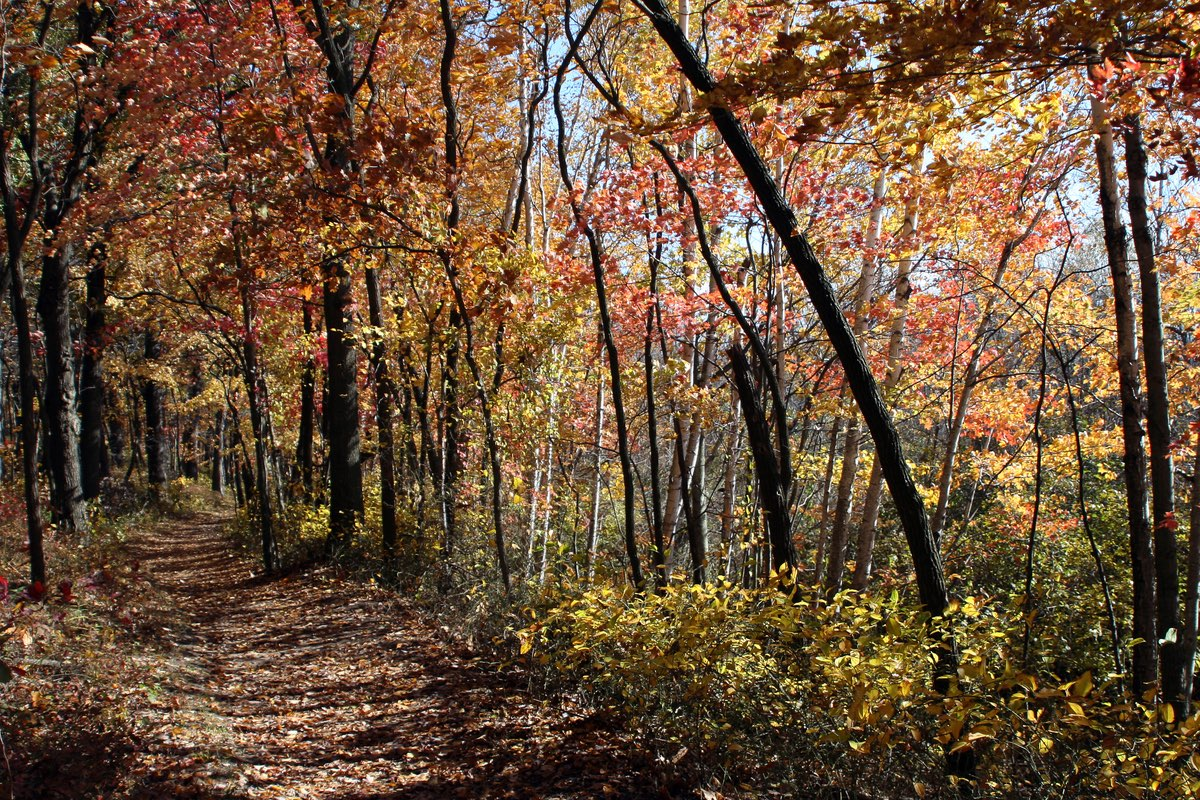 Fall Hike along the Cowles Bog Trail in Indiana Dunes National Lakeshore.