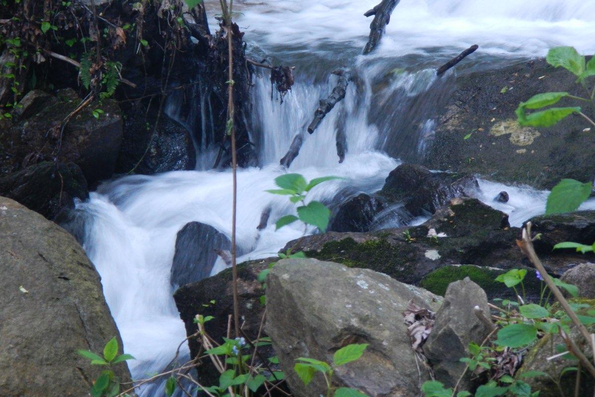 Creek in Amicalola Falls State Park in Georgia.