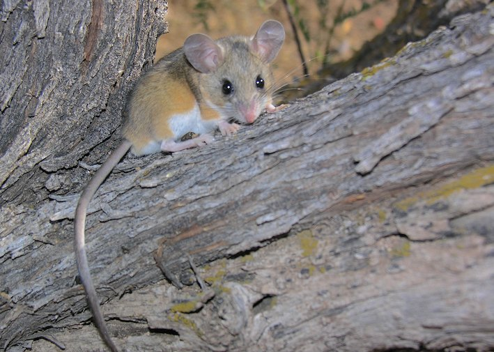 Don't be surprised if you see a few deer mice along the way.