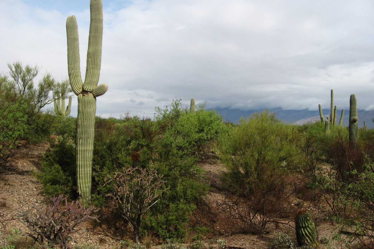 Hiking the Desert Ecology Trail in Saguaro National Park.