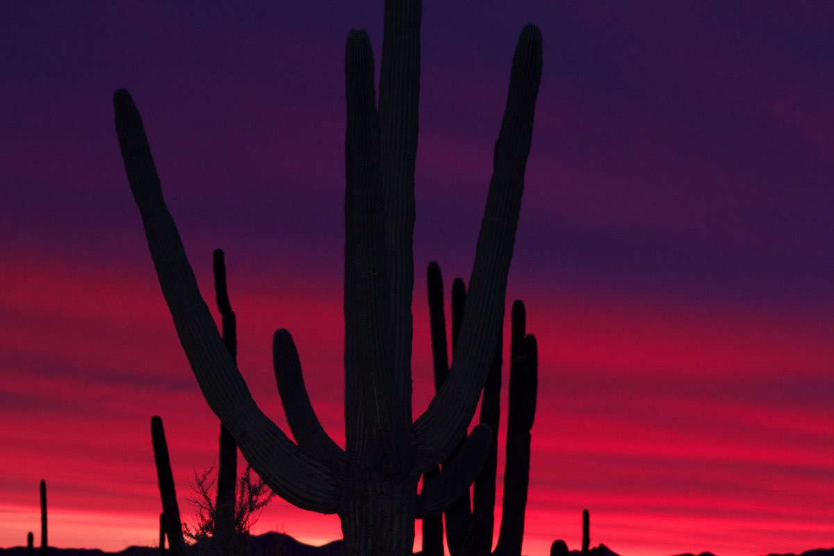 Sunset along the Desert Ecology Trail in Saguaro National Park.