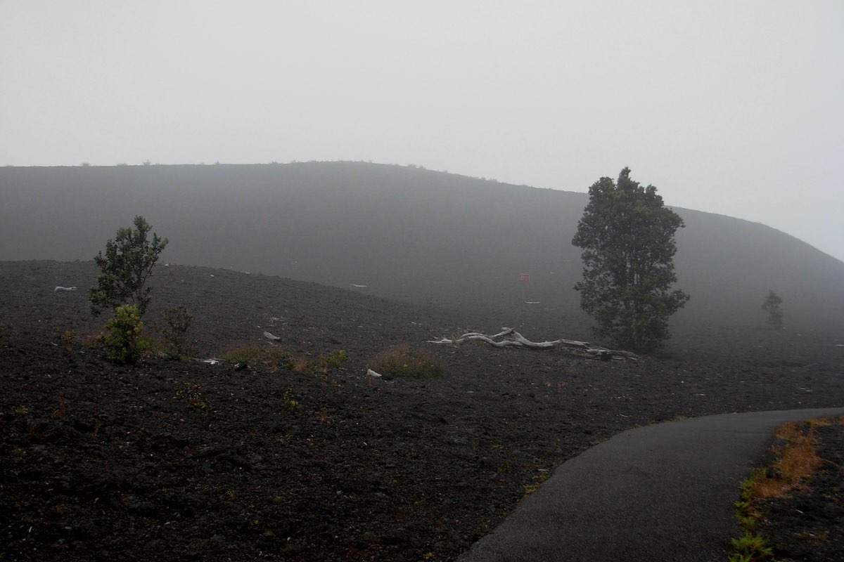 Foggy morning along the Devastation Trail in Hawaii Volcanoes National Park.