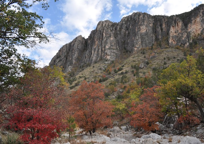 Fall foliage along the Devil's Hall Trail in GMNP, Texas.