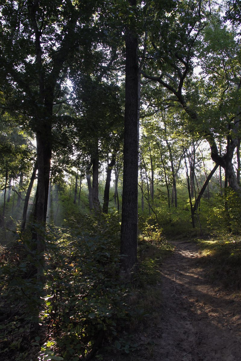 Morning hike in Indiana Dunes National Lakeshore.