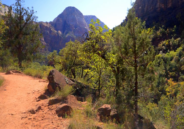 Along the Emerald Pools Trail in Zion National Park.
