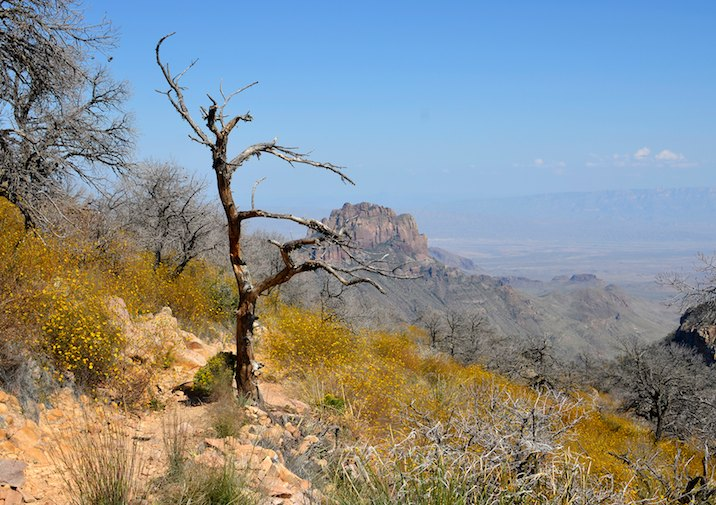 Amazing view from the Emory Peak Trail in Big Bend National Park, Texas.