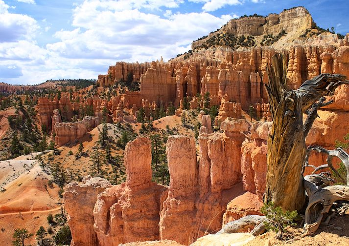 The Fairyland Loop in Bryce Canyon makes hikers feel like they are in a fairytale.