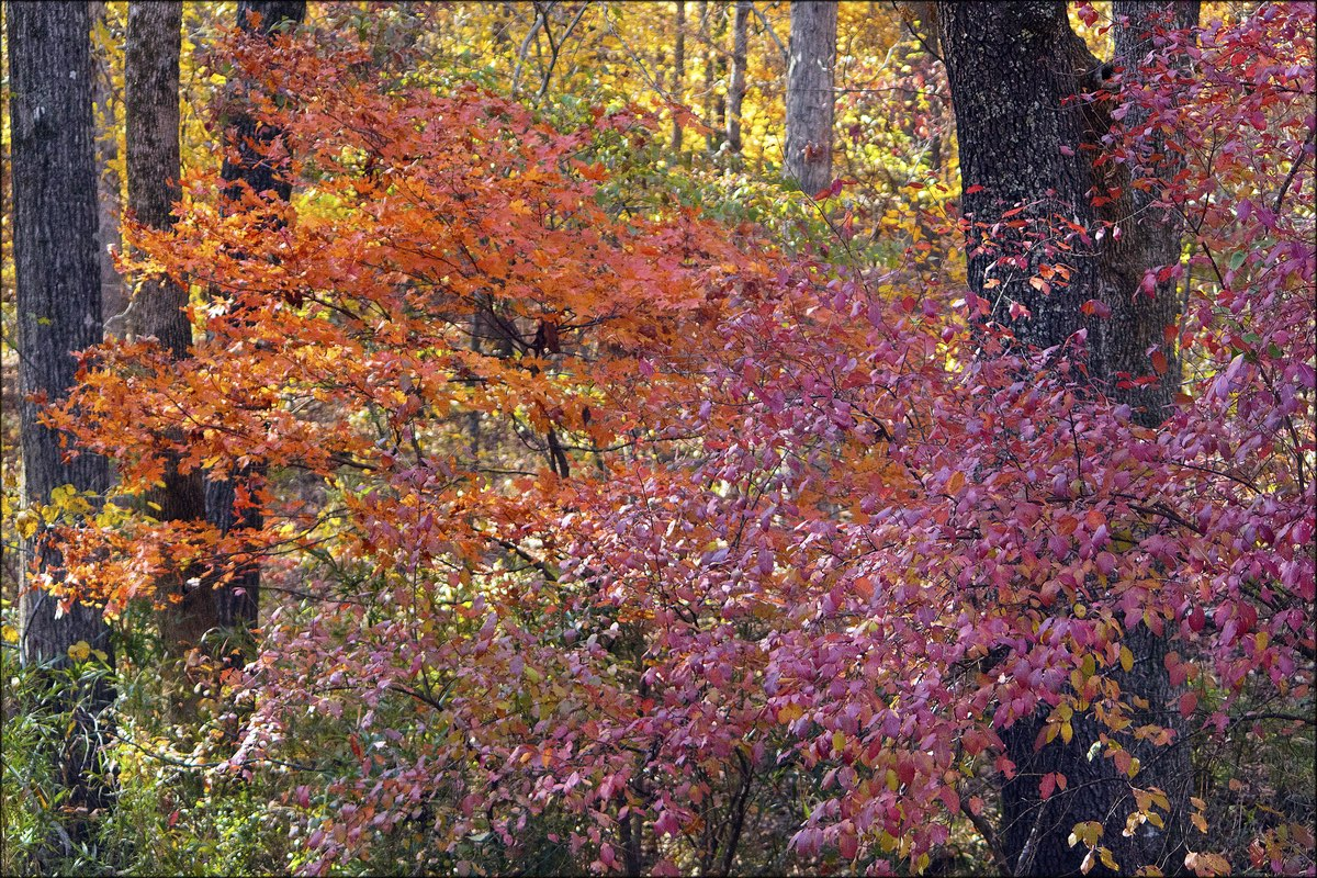 Fall foliage in Devil's Den State Park, Arkansas.