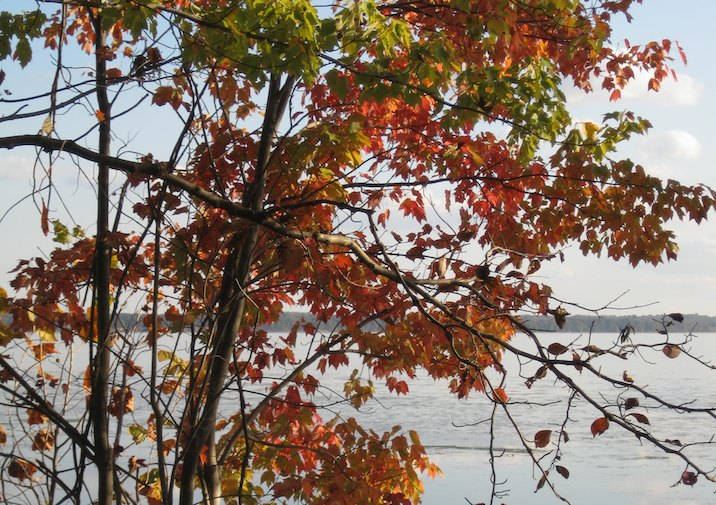 Fall Foliage in Leesylvania State Park near Washington D.C.