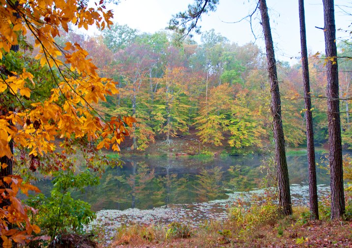 Fall Foliage in Pocahontas State Park near Richmond.