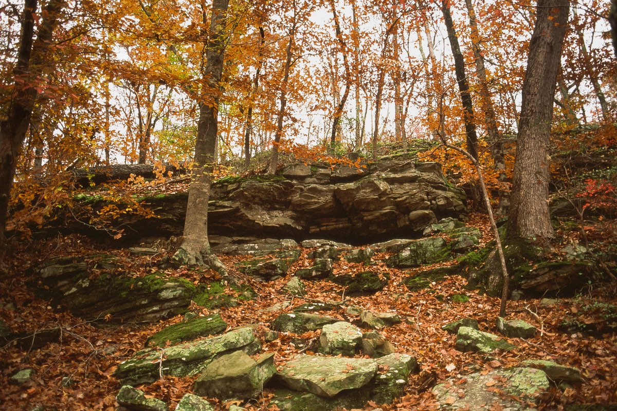 Fall foliage in Mammoth Cave National Park.