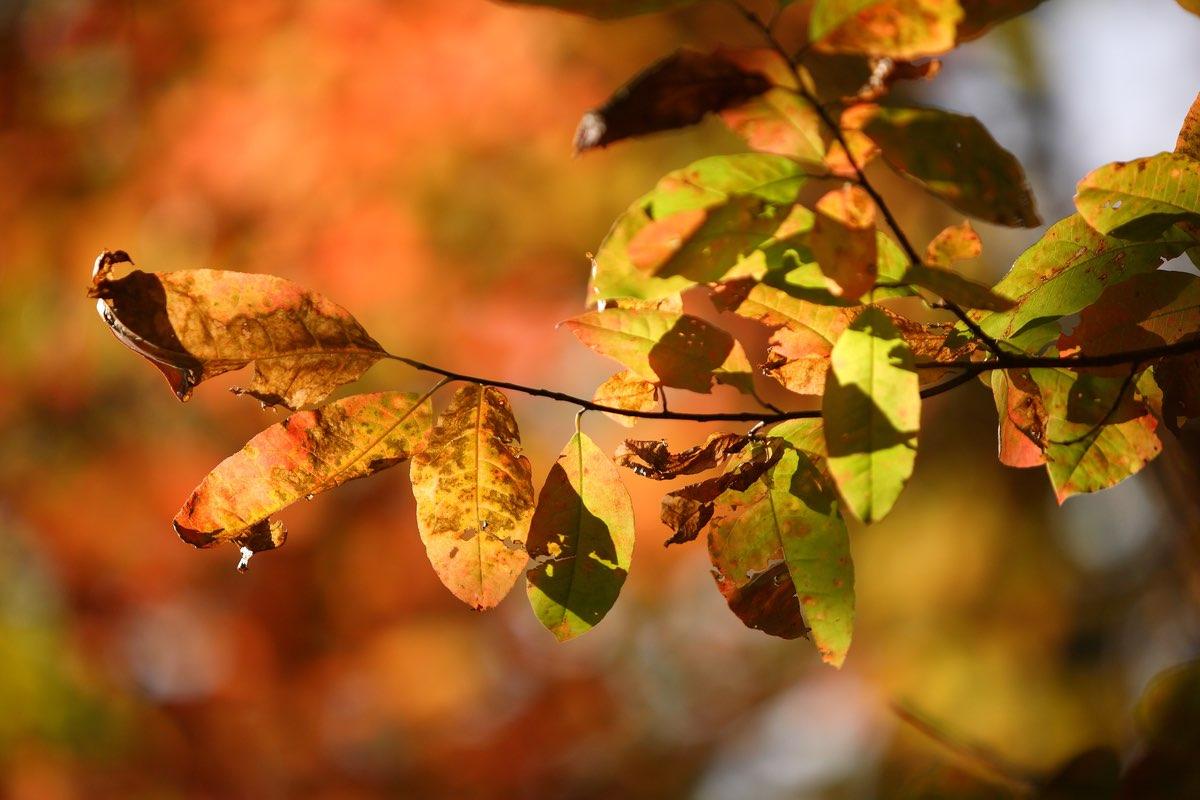 Fall foliage in Amicalola Fall State Park Georgia.