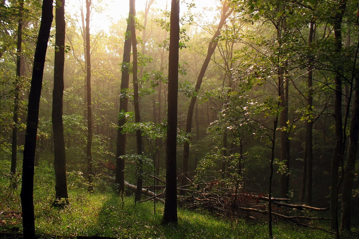 Sunshine after a heavy rain in Mammoth Cave National Park.