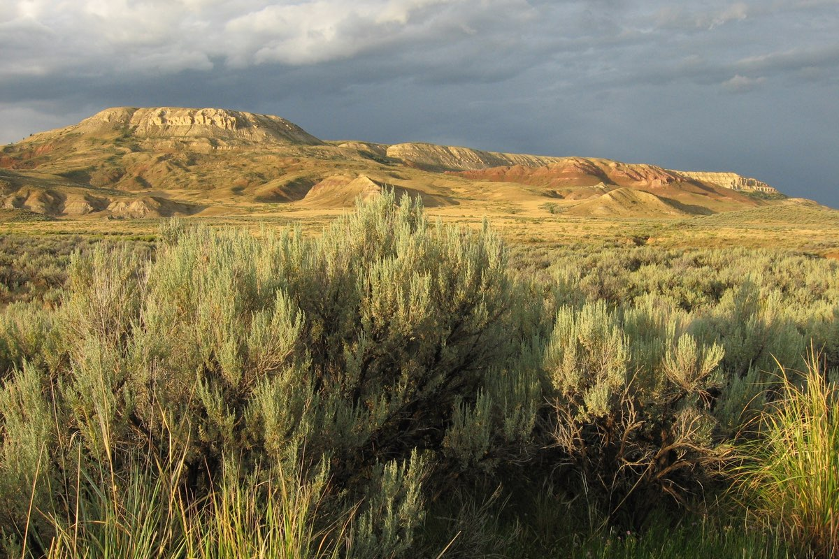 Sagebrush steppe in Fossil Butte National Monument.