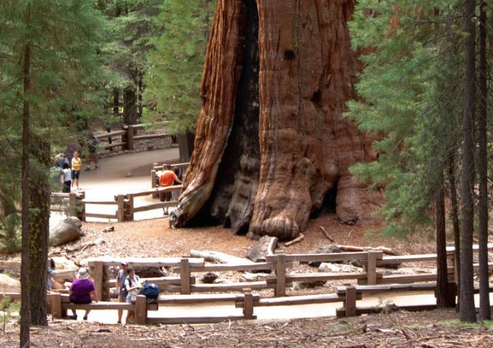 General Sherman is the world's biggest tree in Sequoia National Park.