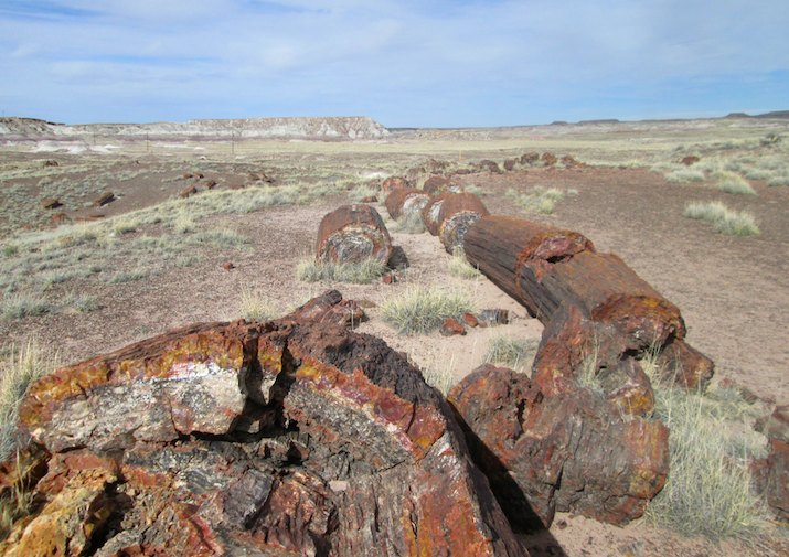 Giant Logs Trail in Petrified Forest National Park, Arizona.
