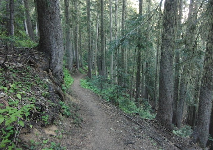 Gobblers Knob Trail in Mount Rainier National Park.