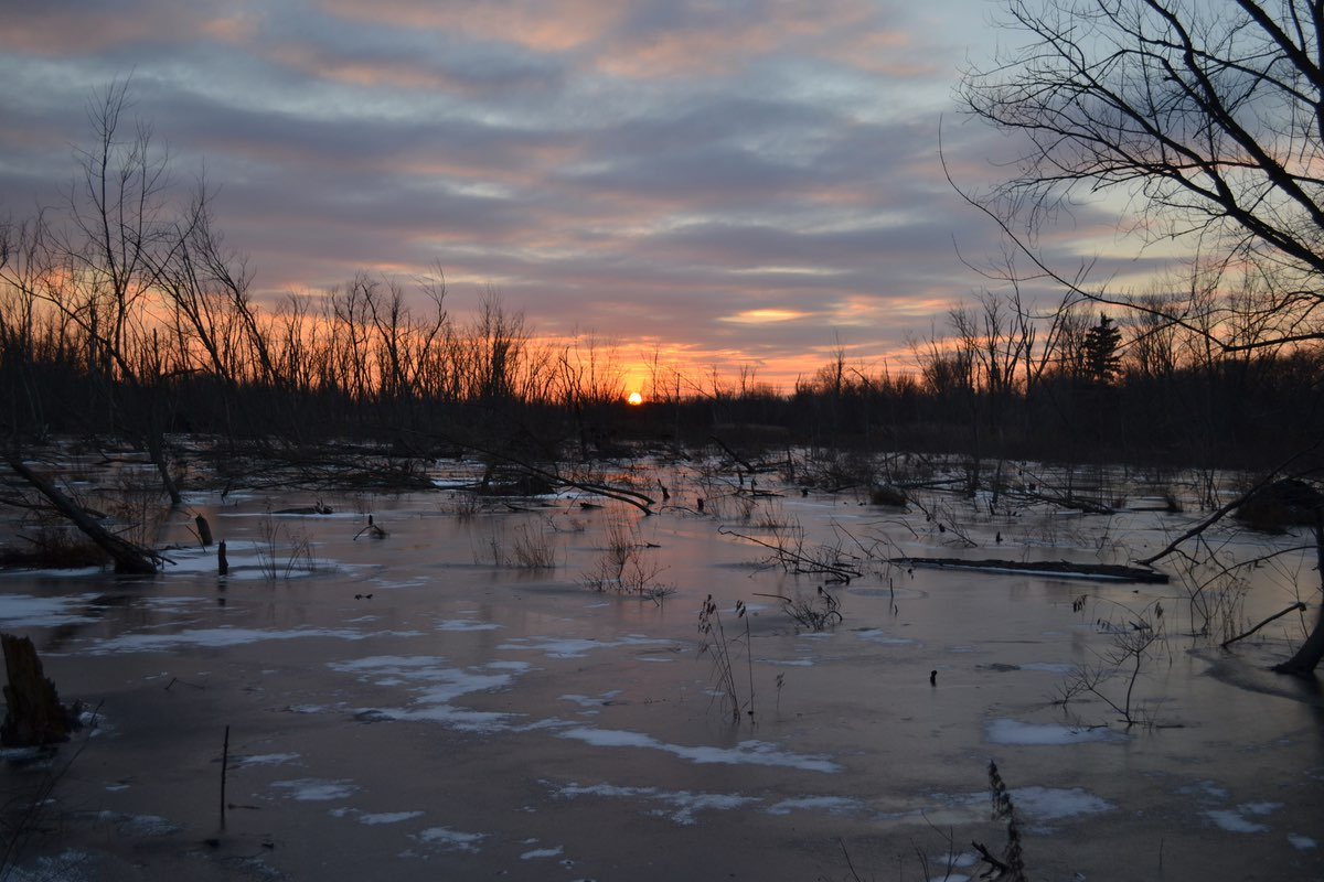 Sunset along the Great Marsh Trail in Indiana Dunes National Lakeshore.