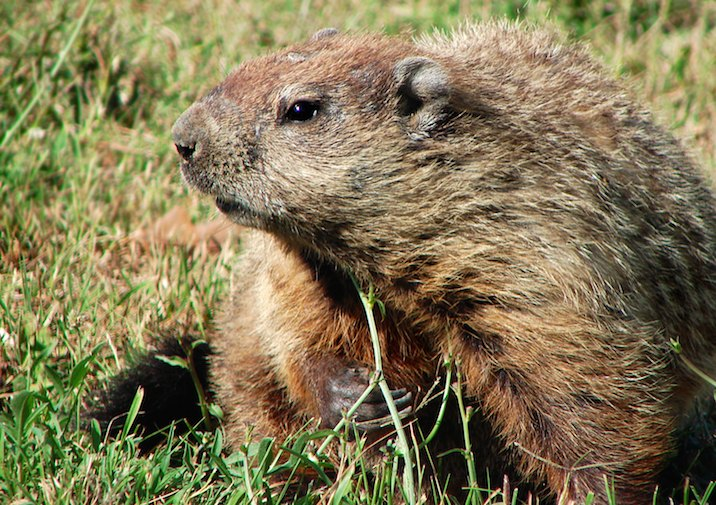 Keep an eye peeled for groundhogs and other wildlife along this trail.