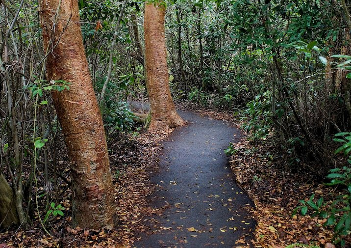 Gumbo Limbo Trail in Everglades National Park.