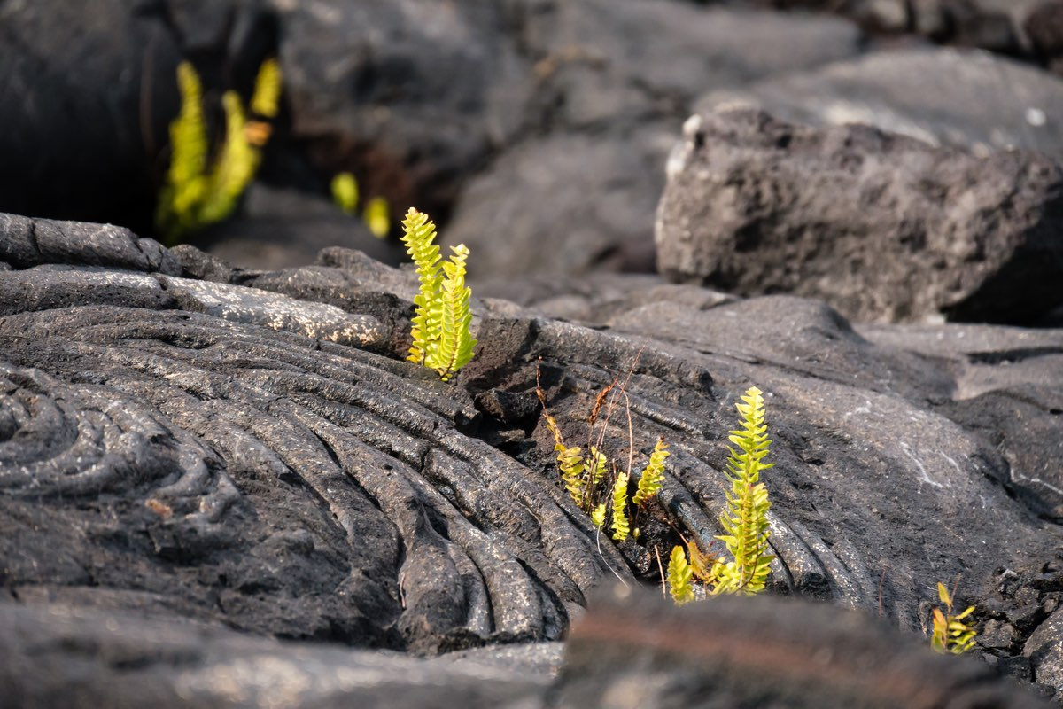Life and death in Hawaii Volcanoes National Park.
