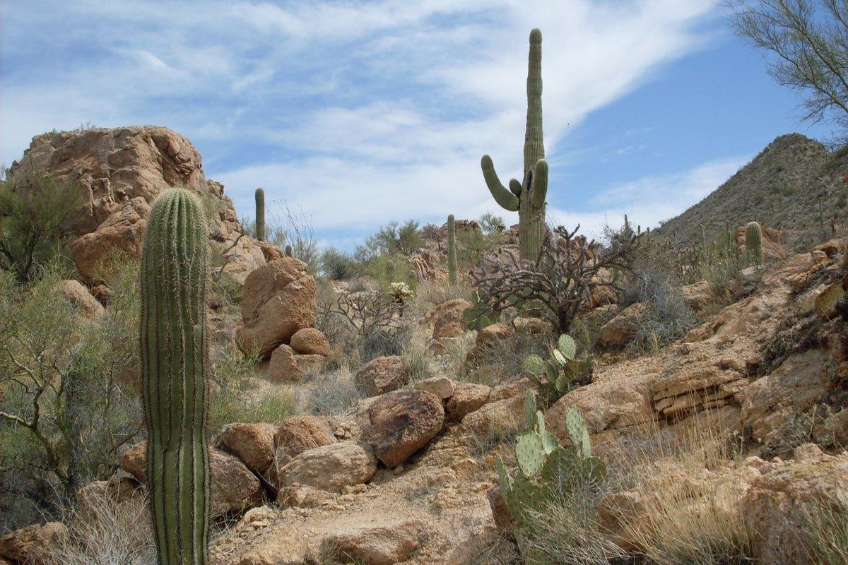 Hiking the Hugh Norris Trail in Saguaro National Park.