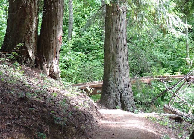 Along the Myrtle Falls Trail in Kootenai NWR.