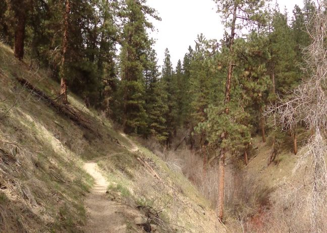 Station Creek Trail in the Boise National Forest.