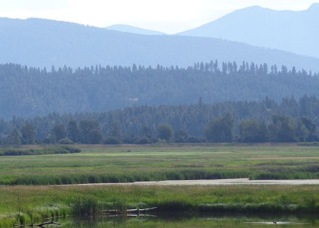 Along the Refuge Road in Kootenai NWR.