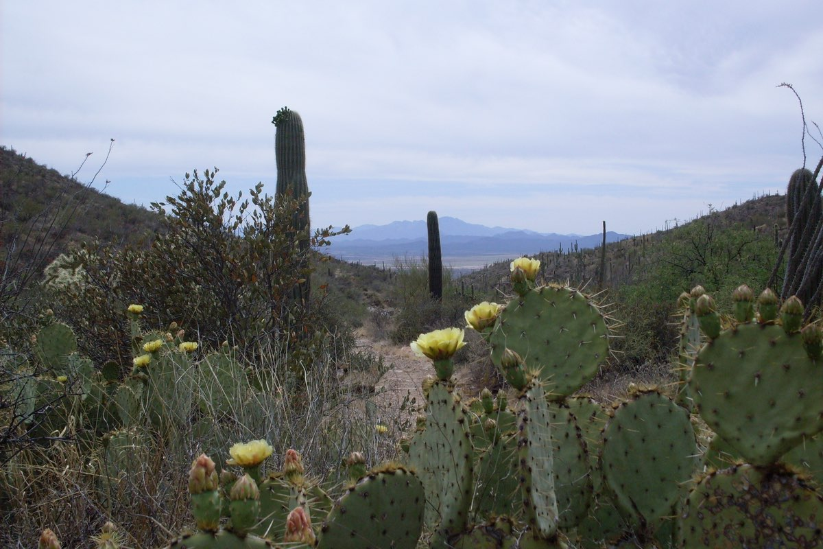 Hiking the King Canyon Trail in Saguaro National Park.
